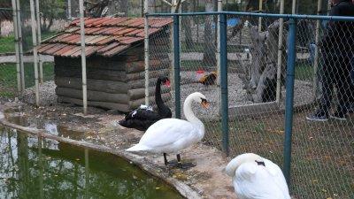В комплекса в Голямо Буково има и кът за птици