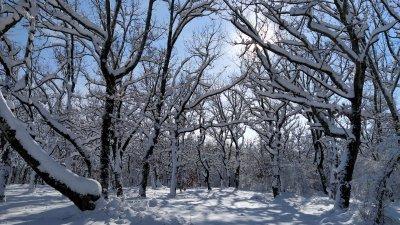 През февруари ще има и валежи от сняг, но без образуване на сериозна снежна покривка. Снимка Десислава Георгиева