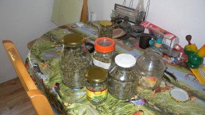 31 стъклени буркани с глави зелена листна маса -канабис,и три конопени растения са намерени и иззети в дома на англичанина. Снимка ОД на МВР - Бургас