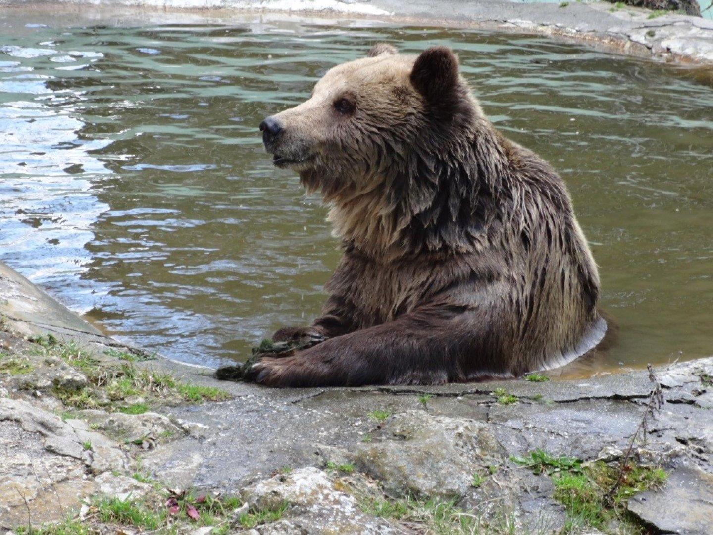300 животни живеят във варненския зоопарк. Снимка Зоопарк Варна