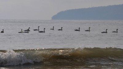Най-високи ще бъдат температурите по Черноморието. Снимка Черно море