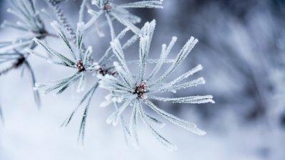 Превалявания от сняг ще има и по Черноморието. Снимка Архив
