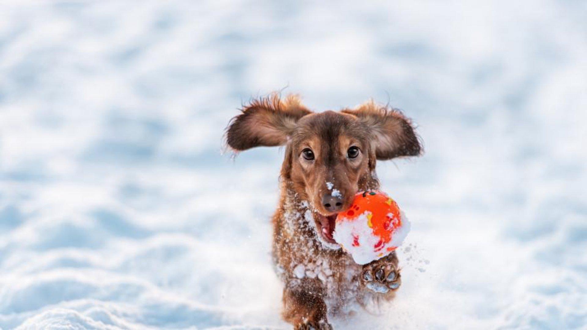 Първите валежи от сняг се очакват от понеделник. Снимка iStock/Getty Images