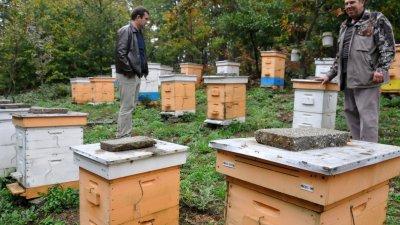 Биопроизводство на манов мед има в село Кости. Снимка Архив Черноморие-бг