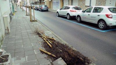 Вандали изкорениха новозасадено дърво в центъра на Бургас. След асфалтирането на улица Хан Крум, на единия тротоар бяха засадени дръвчета. За съжаление едно от тях вече е изкоренено.Снимки Черноморие-бг
