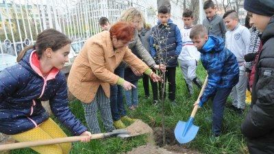 Първите дръвчета бяха засадени в двора на СУ