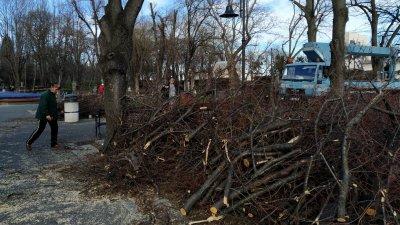 Ето така изглеждаше района около Охлюва, където бяха кастрени клоните на дърветата. Снимка Архив Черноморие-бг