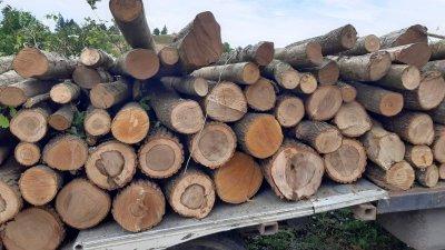 Дървесината е била немаркирана и без превозен билет. Снимка РДГ - Бургас