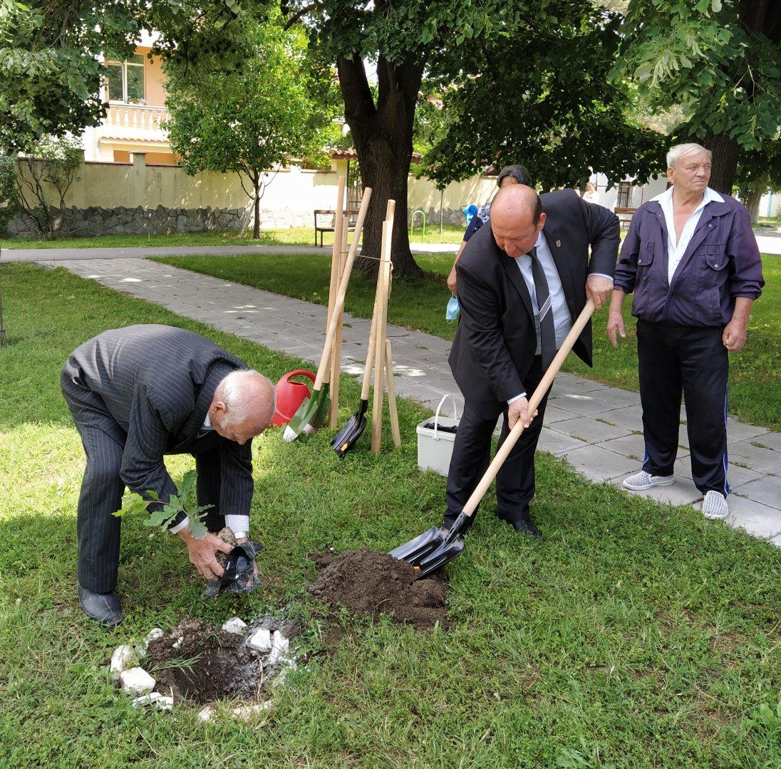 Фиданката бе положена в земята от 90-годишния Стоян Калпаклиев, за да стигне поне неговата възраст. Снимки Черноморие-бг