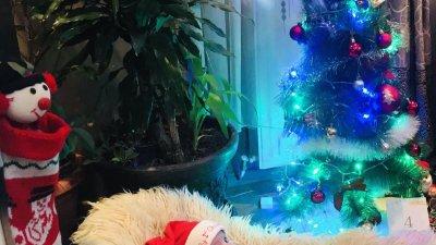 Калин е само на четири месеца и това е първата му Коледа