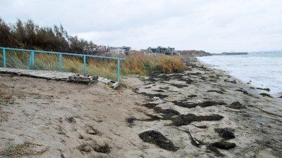 Есенното море е отнесло голяма част от пясъчната ивица на бургаския квартал Крайморие. В продължение на 300 метра брегът е изровен до глина, а възстановяването на пясъка е възможно само с помощ на тежка техника. Снимки Черноморие-бг