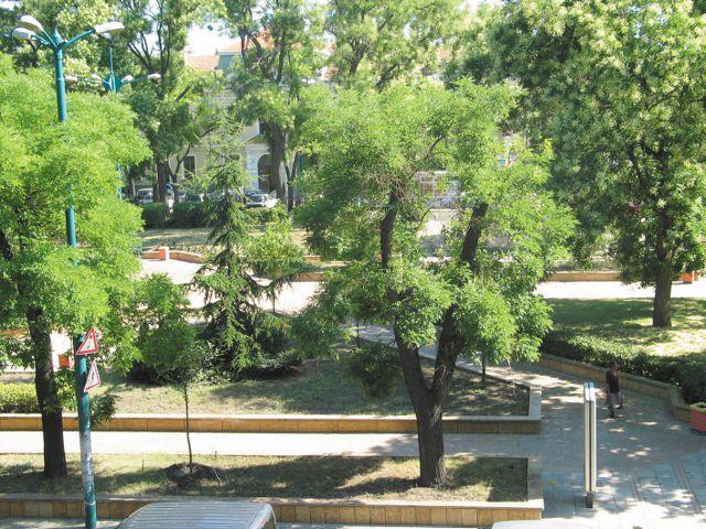 Преброяването включва всички дървета в парковете и частните имоти