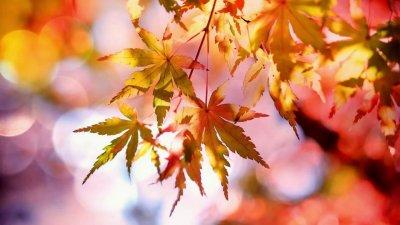 Необичайно топло е времето през ноември