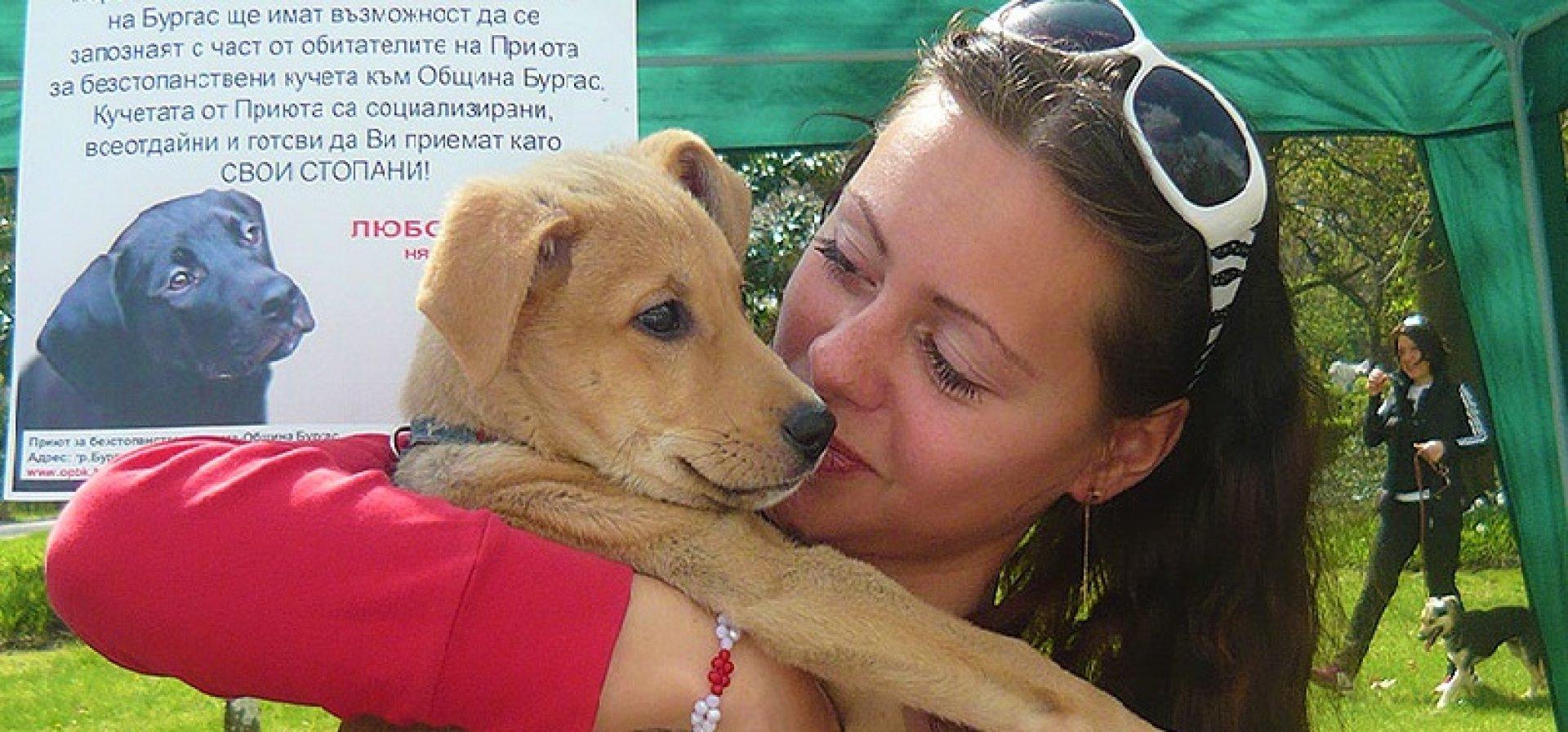 В Бургас от години не съществува проблем с безстопанствените кучета