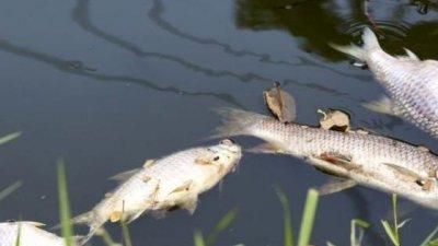 Сигналът за мъртвата риба е подаден на телефон 112 на 19-ти септември. Снимката е илюстративна