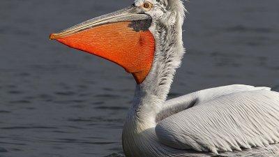 Птиците нощуват в спокойното Атанасовско езеро и прелитат да се хранят в близките езера Вая и Мандра