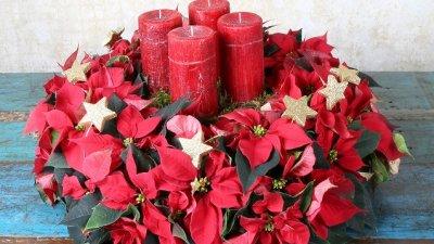 Коледната звезда е подходяща за декорация у дома и в офиса