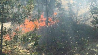 Пожарът между селата Вресово и Зайчар възникнал днес по обяд. Снимки пресцентър РДГ