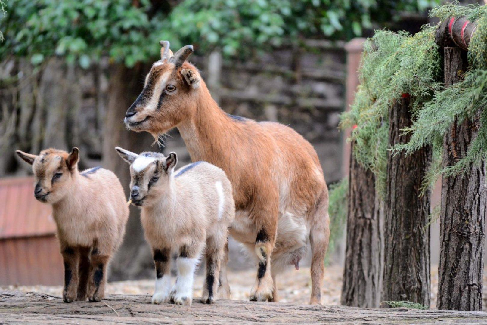 400 животни от 62 вида живеят във варненския зоопарк