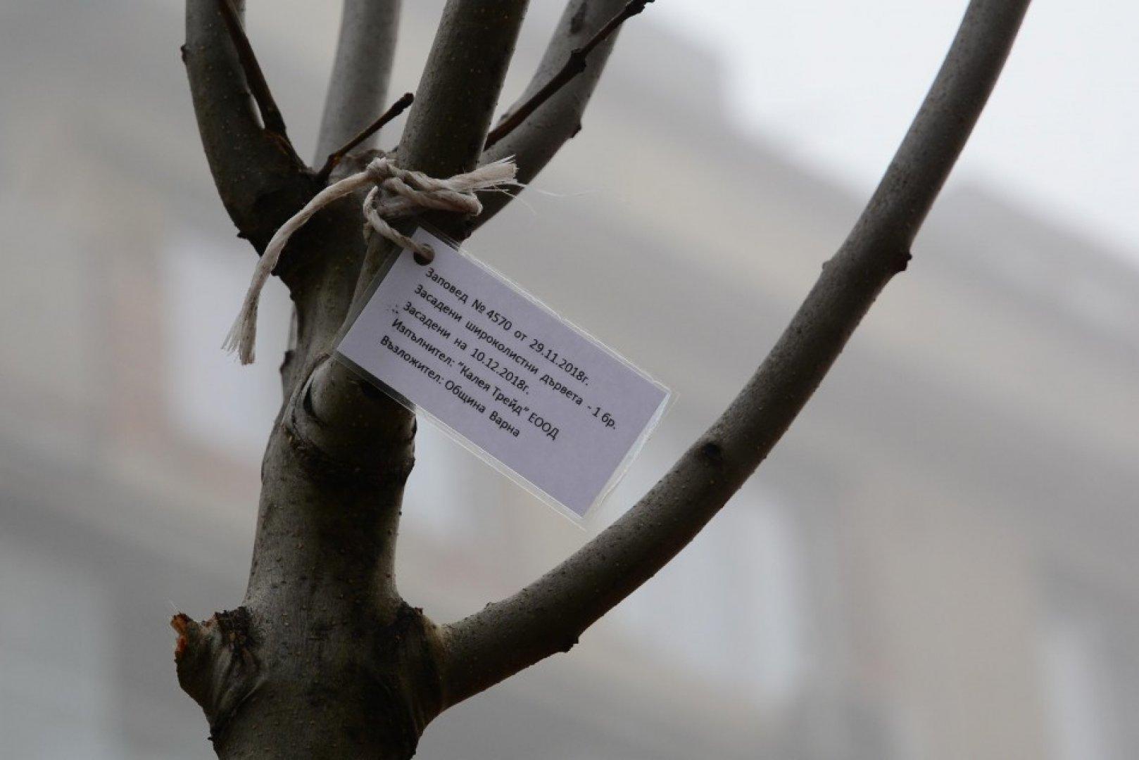 Залесяването продължи и днес. Снимки Община Варна
