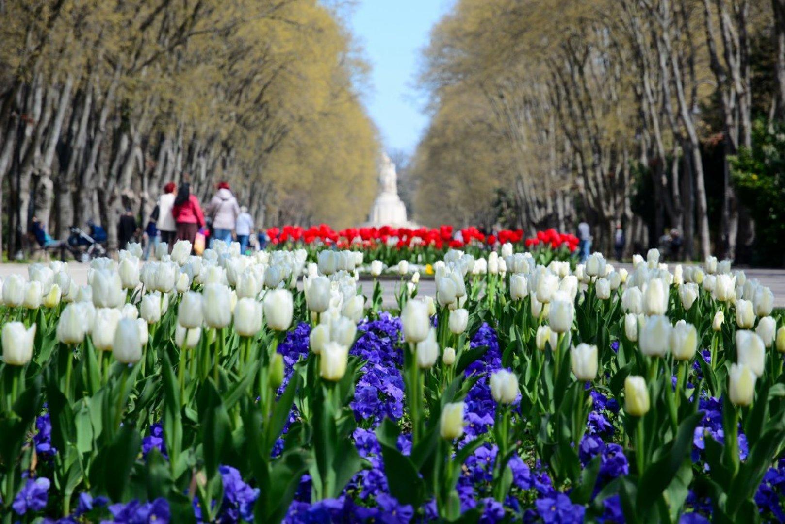 Цветята са вече са с височина около 8-10 см. Снимка Община Варна