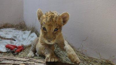 Ремонтът на зоопарка тече по оперативна програма Региони в растеж. Снимка Община Варна