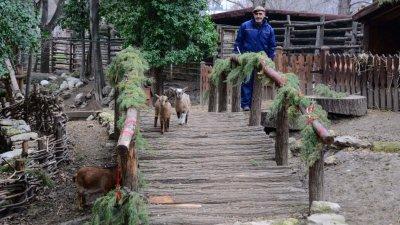 От зоопарка призовават да оставите коледните дръвчета за храна на животните. Снимка Община Варна