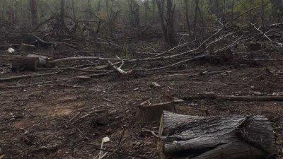 Заповедта е на директора на Регионалната дирекция на горите в Бургас. Снимки РДГ